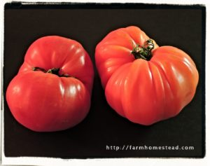 zapotec pleated heirloom tomato