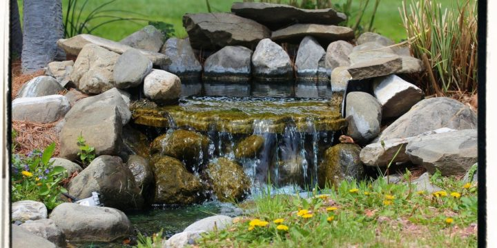 Cleaning Your Water Garden and Preparing for Winter