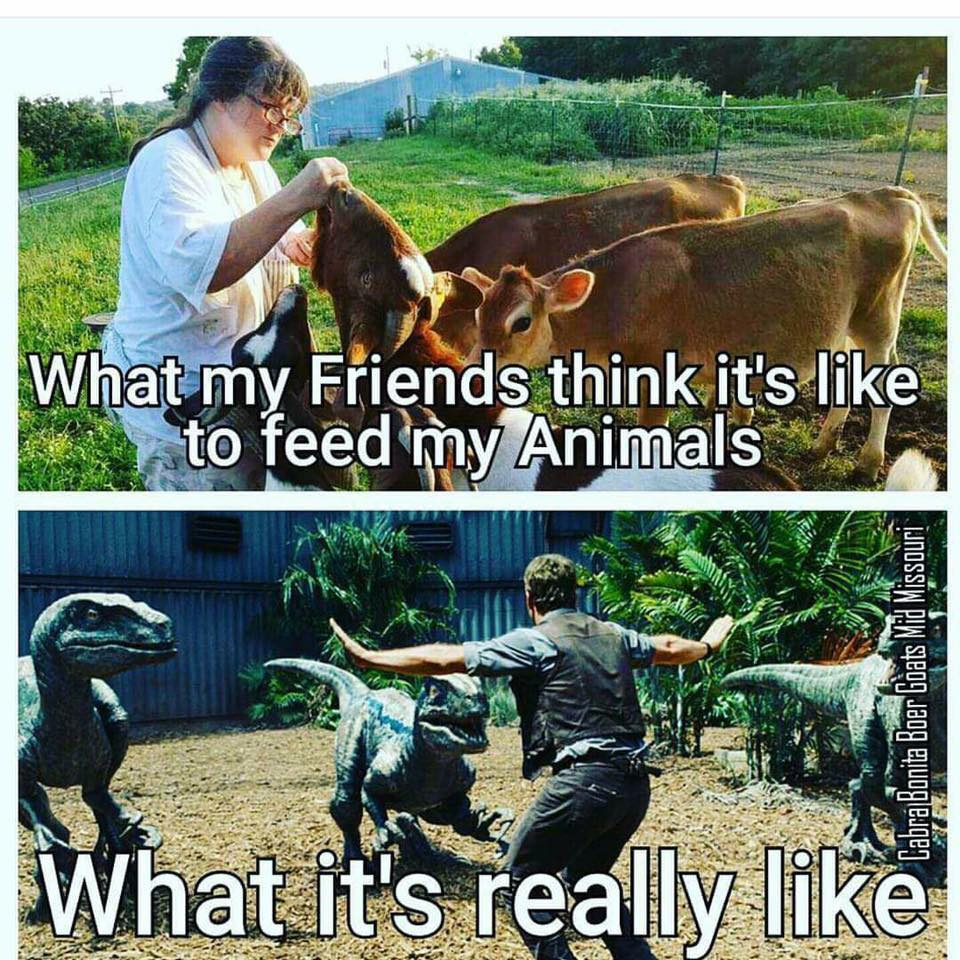 feeding farm animals is not so serene as one might think